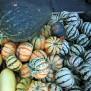 Ornamental squashes, Byward market
