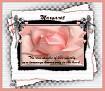 Margaret-gailz-pink rose