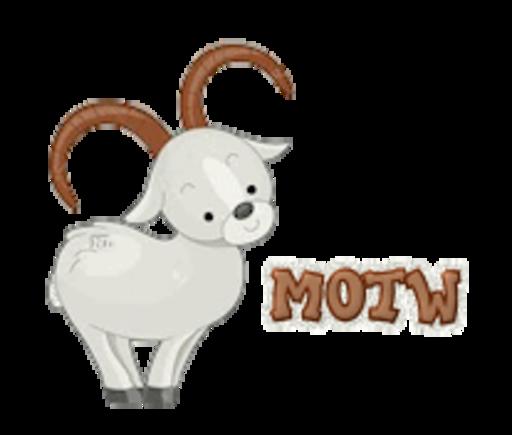 MOTW - BighornSheep