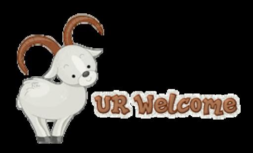 UR Welcome - BighornSheep