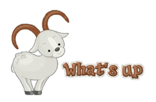 What's up - BighornSheep