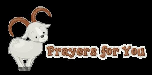 Prayers for You - BighornSheep