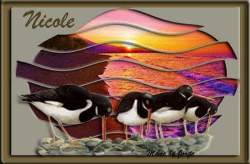 Nicole - Falklands Sunset-Jorge