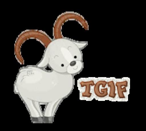 TGIF - BighornSheep