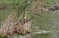 Floating Island #7