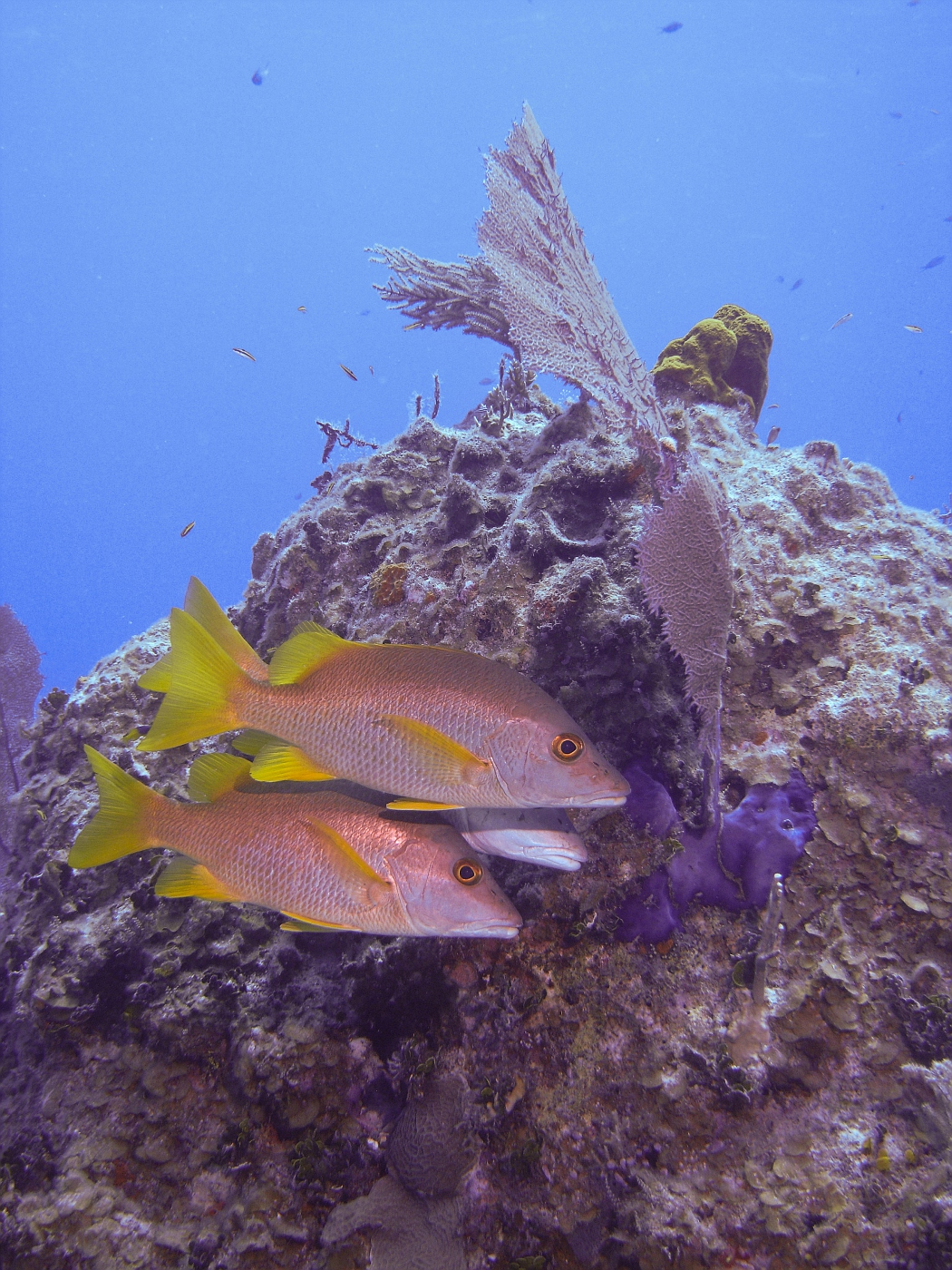 Grand_Cayman-21.jpg