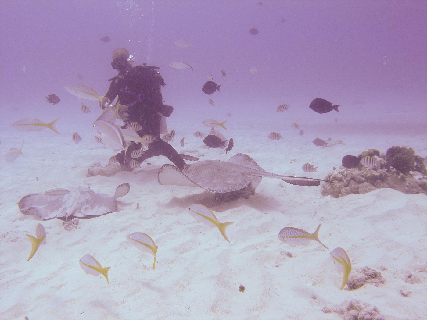 Grand_Cayman-56.jpg