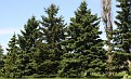 When you are standing in the yard next to these amazing trees, you seem so tiny!