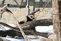 070216 Natl Zoo008