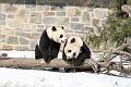 070216 Natl Zoo025