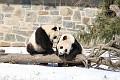 070216 Natl Zoo026