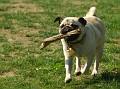 20070513 - Westport Dogs - 10-sm