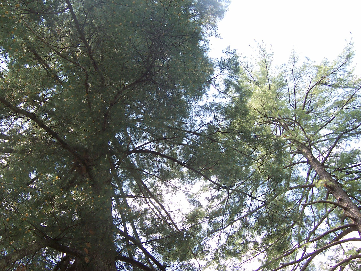 Mesier Park, straight up