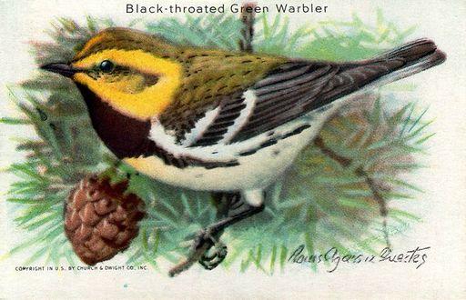 1938 Useful Birds of America Series 10 #02 (1)