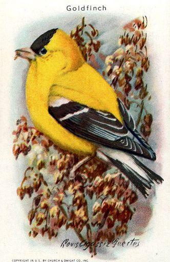1938 Useful Birds of America Series 10 #07 (1)