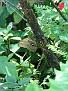 Butterfly World Butterflies Close Up11