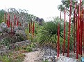 Arid Garden Red and Amber Reeds02