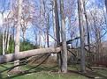 Tree Down (12)
