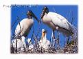 Everglades NP 05