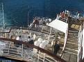 Braemar's Stern as we depart Genoa
