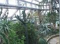 206. Cacti Succulents