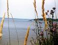 Lake Mitchell viewed through rushes & flowers, 1980