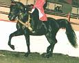 -HMR ZHAGA KHAN #259643 (Ibn Zaghloul x HMR Dorzah Talal, by *Tala) 1982 black Egyptian/ Crabbet gelding bred by Howard Marks; sired no registered purebreds