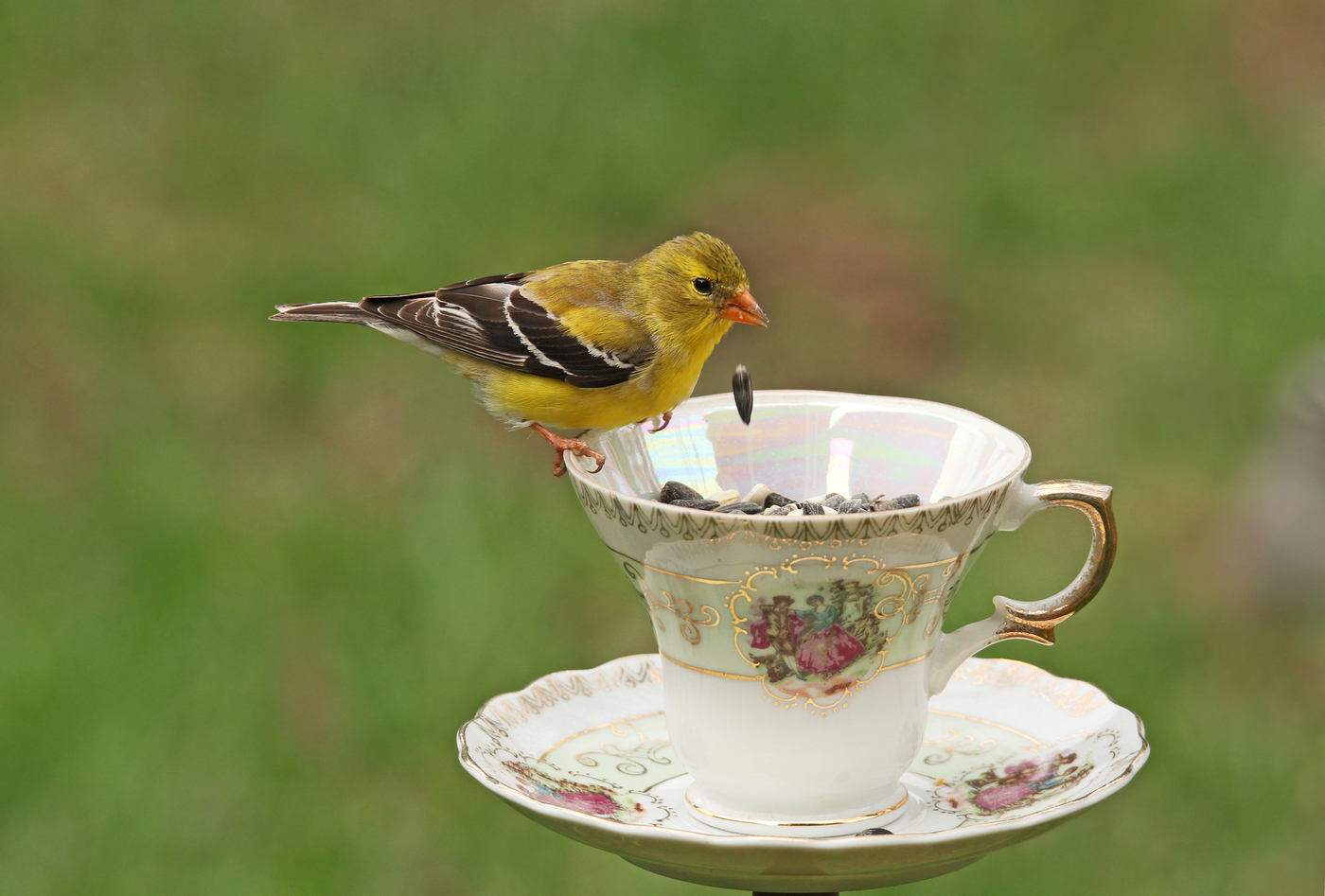 Goldfinch Teacup #12