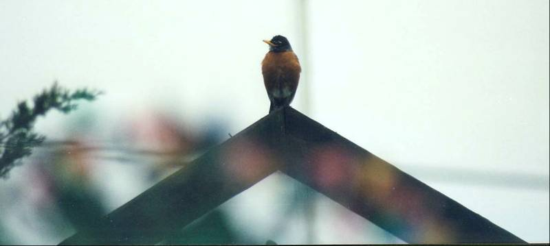 robin on archway