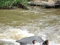 Elephant dumping someone else