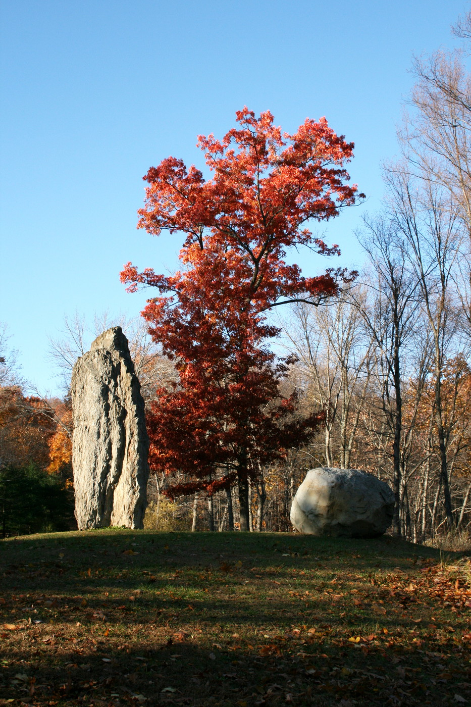 Large rock and colorful tree
