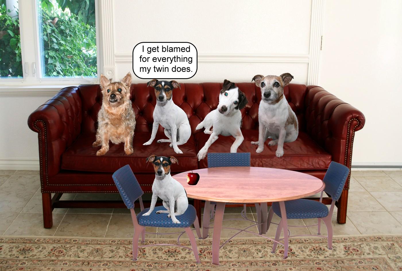 Dogs on Sofa Kadie