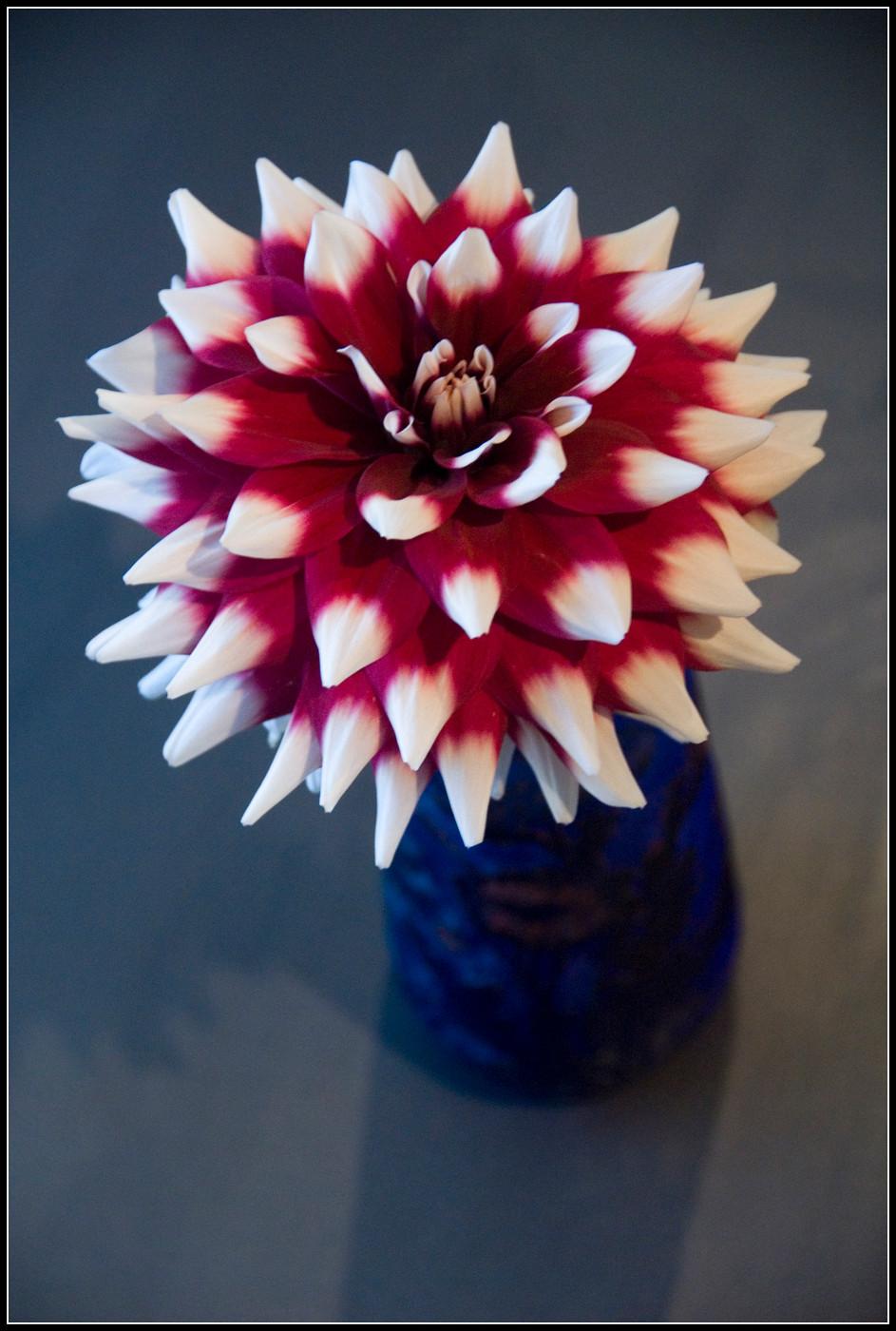 fleurs depargne