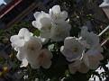 23-5-2009 10-38-09 πμ