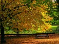 Autumn in an Orange Park 020