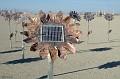 Field of Sunflower Robots