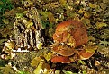 Веселые грибочки Funky mushrooms DSC 5946 068 4 1