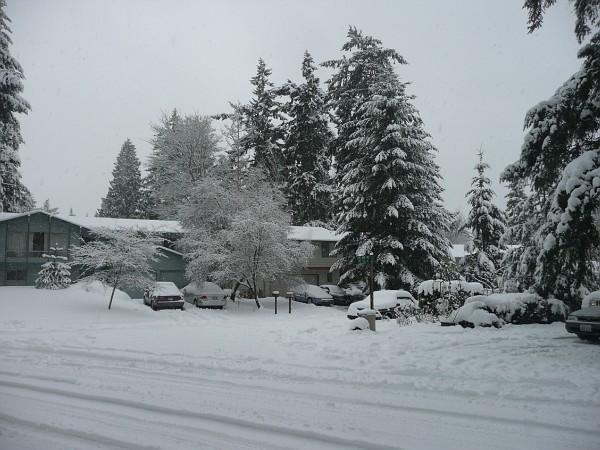 Snow Winter 004
