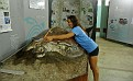 An exhibit at the Sea Turtle Conservancy Museum