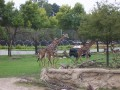 The Toledo Zoo 006