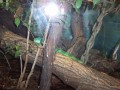 The Toledo Zoo 076