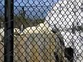 2007 Toledo Zoo 016
