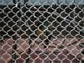 2007 Toledo Zoo 039