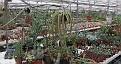 nursery sale plants