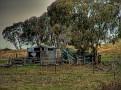 Mumbil Farm 008