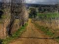 Brewongle Road farm lane 001