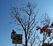Trees 015