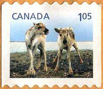 Canada Baby Deer