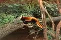 1993 Bronx Zoo 14574