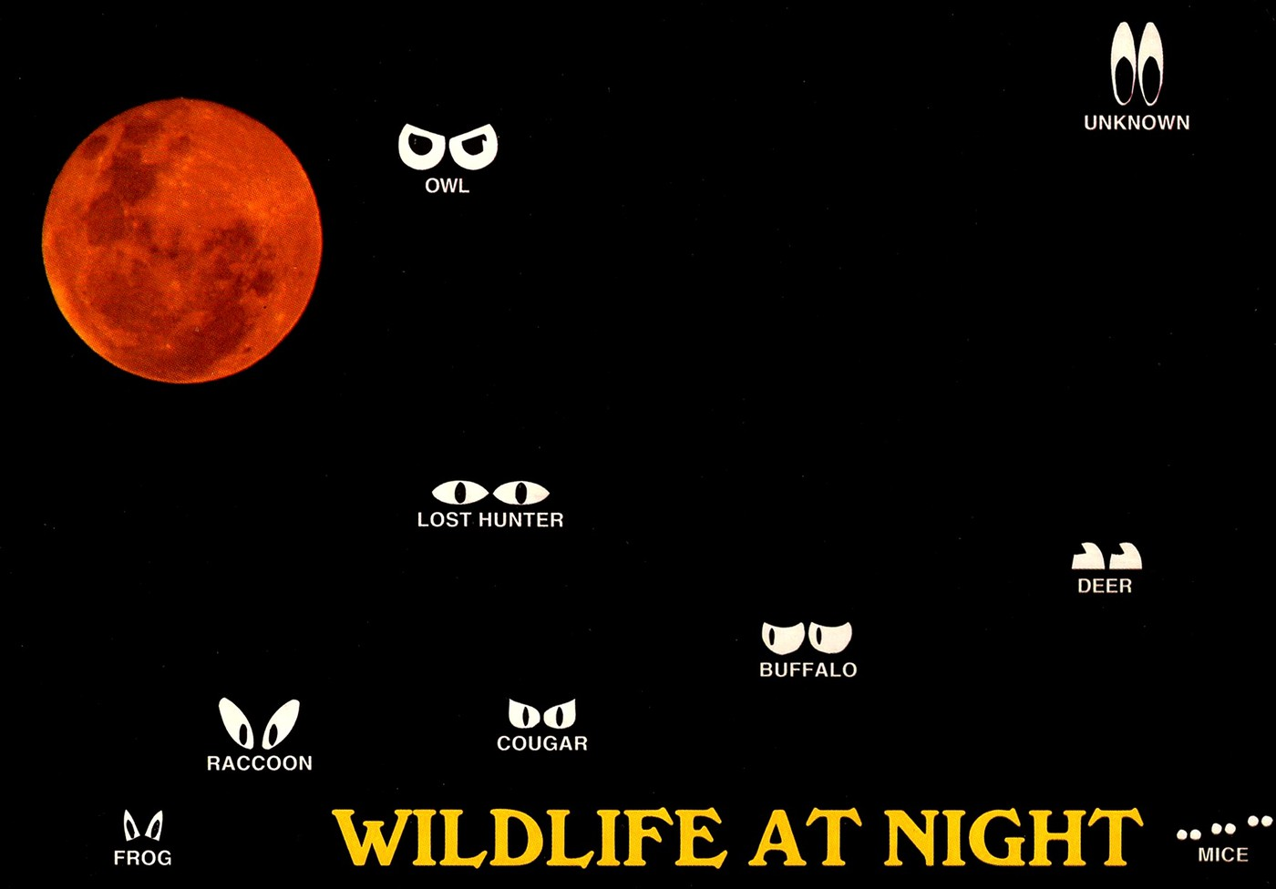 Wildlife at Night